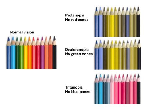 Color Blind What Do They See Cognitive Elements Of An Effective Ui Ux Design
