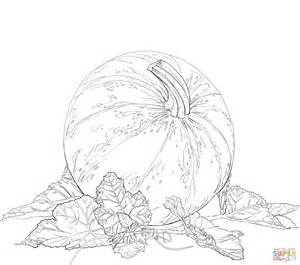 pumpkin leaf coloring pages pumpkin leaves colouring pages sketch coloring page