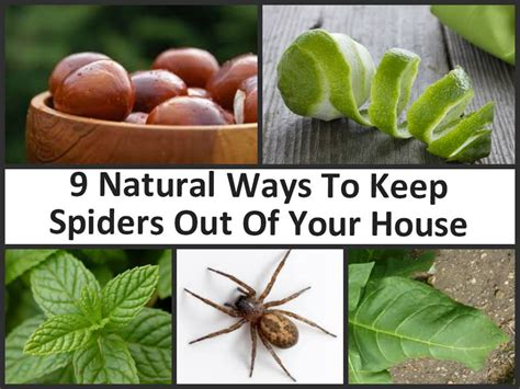 how to keep spiders out of your bed natural ways to keep your home spider free diy cozy home