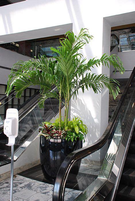plantas de interior altas plantas de interior altas latest humedad plantas para