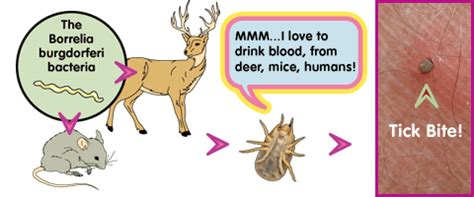 how do you get a tick a ticks what are they for science buzz