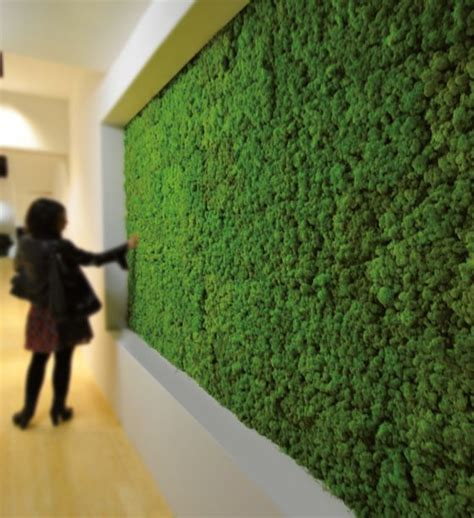 ideas  moss wall  pinterest moss wall art