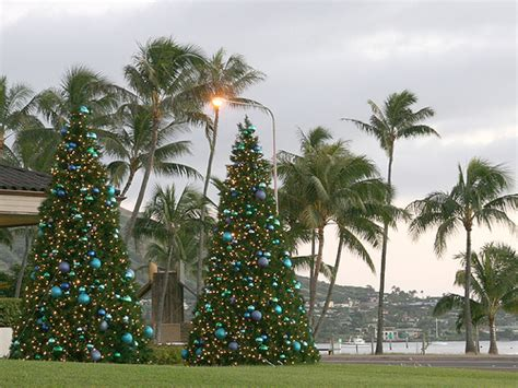 traditional and hawaiian christmas trees flickr photo