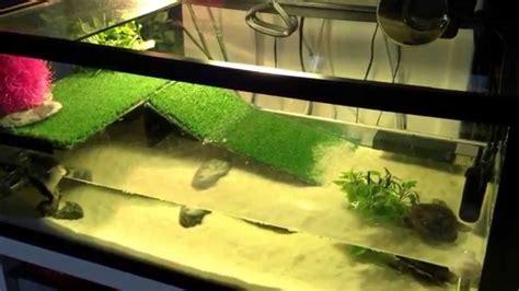 tout ce qu il faut pour avoir des tortue d eau
