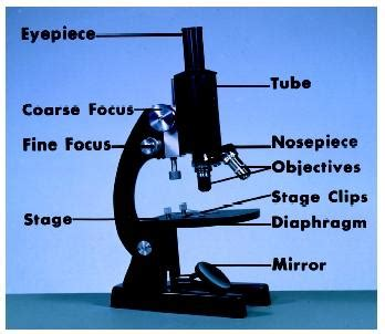 how does a compound light microscope magnify images microscopes 6