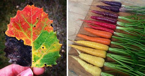 nature colors 15 photos reveal the spectrum of autumn s colors
