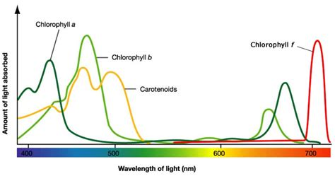 Absorption Spectrum Johnny Dissidence