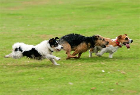 dogs running pictures of safe exercises for you and your