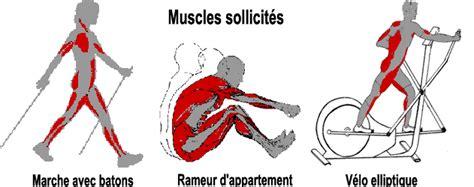Les Bienfaits De La Marche Rapide Sur Tapis by Muscles Sollicit 233 S En Velo Elliptique Rameur Et Marche