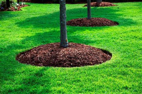 corteccia da giardino pacciamatura giardinaggio tecniche coltivazione