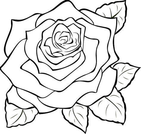 wallpaper bunga mawar vektor gambar vektor gratis rose mekar penuh bloom bunga