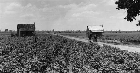 harvesting plantations in tarkeeth state mississippi flag facts maps points of interest