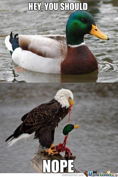 Duck Memes - bad advice duck meme www pixshark com images galleries with a bite