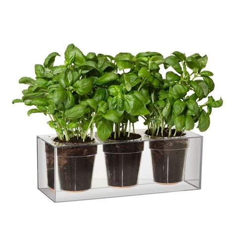 self watering clear cube planter ippinka