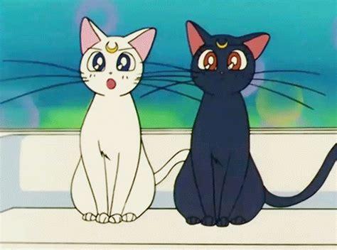 Anime Kitten by Cat
