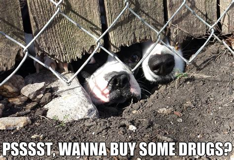 catnip for dogs dogs give a hefty bargain for catnip by acevesgame meme center