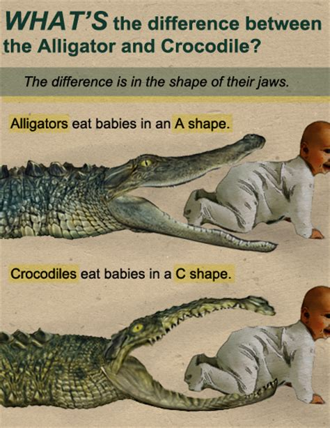 the difference between alligators and crocodiles fake science what s the difference between the alligator and
