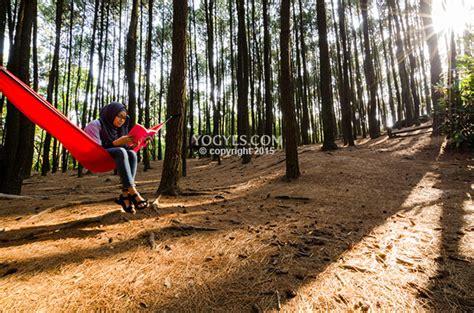 hutan pinus mangunan berburu foto  tengah ketenangan