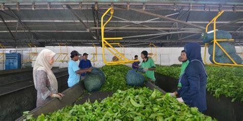 Pabrik Teh Pucuk cyber extension kementerian pertanian pusat penyuluhan