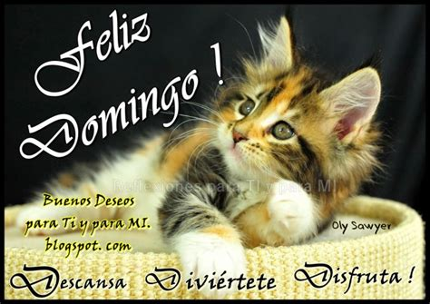 imagenes feliz domingo con gatos lindos gatitos con frases lindas de buenos dias en