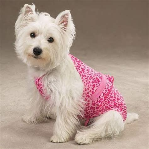puppy bathing suits zack zoey leopard bathing suits for dogs ebay
