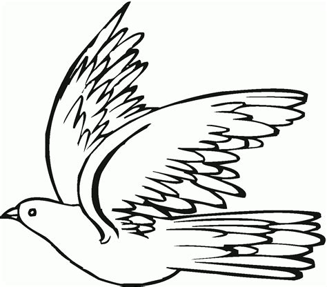 free drawing pigeon coloring pages