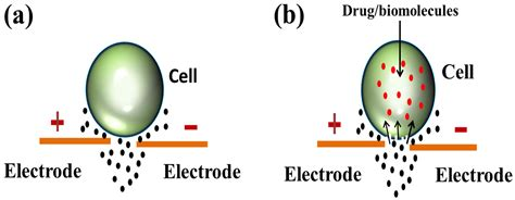 Outside Plants electroporation based drug delivery and its applications