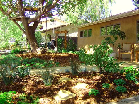 dog tree house what does a water wise drought tolerant yard look like julie orr design