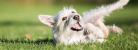 does petsmart sell dogs flea prevention and treatment petsmart