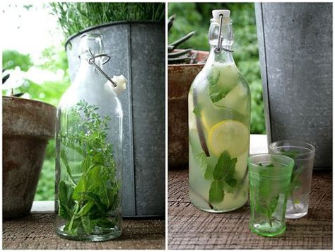 Biohalty Herbal Drink 1000 images about drinks summer coolers on