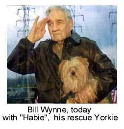 smokey the yorkie doodles war and yorkie on