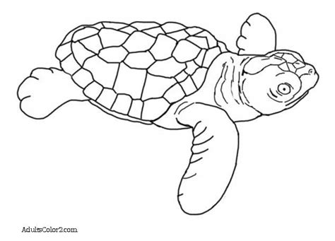 loggerhead sea turtle coloring page