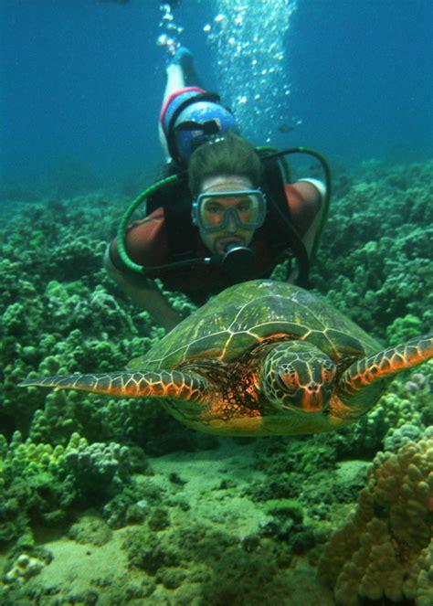 past of dive swimming with sea turtles in hawaii hawaiian explorer