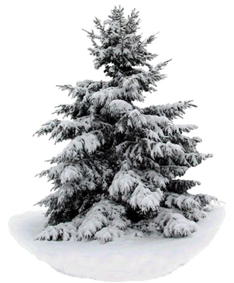 snow covered evergreen printable image