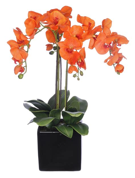 Orchid Arrangements In Vases by Phalaenopsis Orchid Arrangement In Cube Ceramic Vase