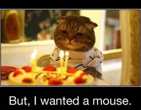 happy birthday images funny  funny images