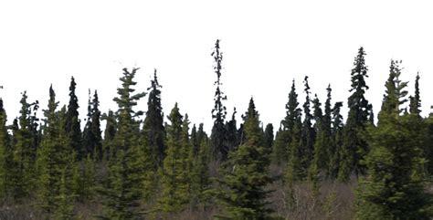 forest render forest background png google search render pinterest