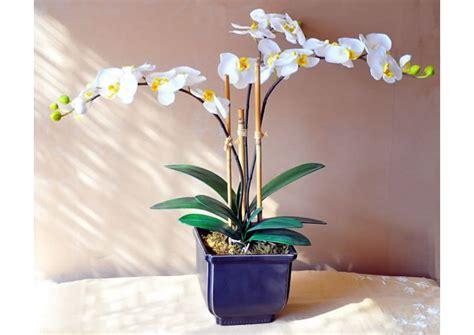 imagenes de orquideas naturales arreglos con orquideas naturales arreglos florales para