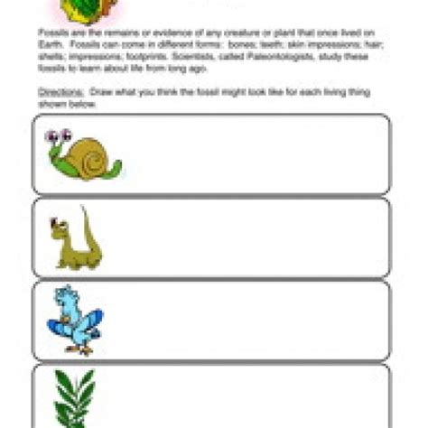 Fossil Worksheets by Fossils Worksheet Photos Getadating