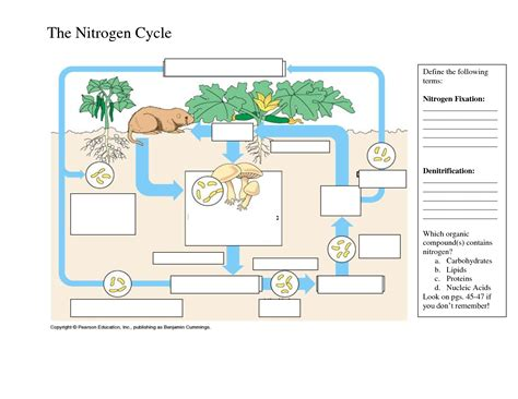 Cycles Worksheet by Uncategorized Carbon Cycle Diagram Worksheet