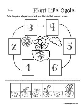 free printable animal life cycle worksheets life cycle of a plant worksheet resultinfos