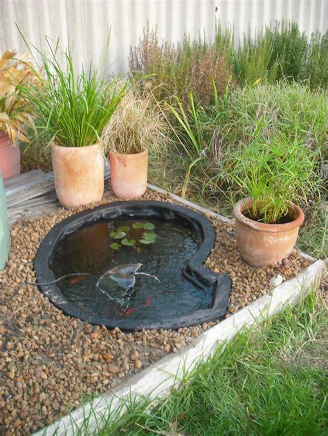 fish for garden pond backyard design ideas