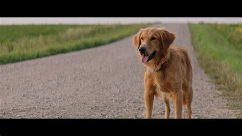 the dogs purpose a s purpose review high def digest