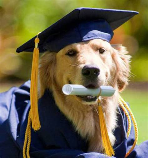 puppy graduation 10 dogs who graduated from college cus