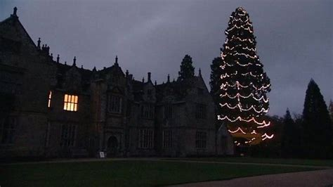 wakehurst place christmas tree lights installed bbc news