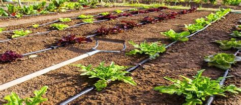watering systems for vegetable gardens drip irrigation or soaker hose for vegetable garden