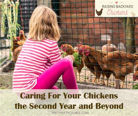 How To Care For Chickens In Your Backyard Raising Backyard Chickens Caring For Your Chickens The Second Year And Beyond