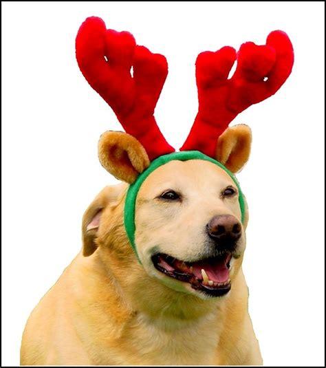 Jo In Pet Transfiguration Cap L pet krewe reindeer antlers cat costume zulily beds