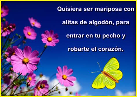 frases con mariposas imagenes frases con mariposas azules imagenes de mariposas