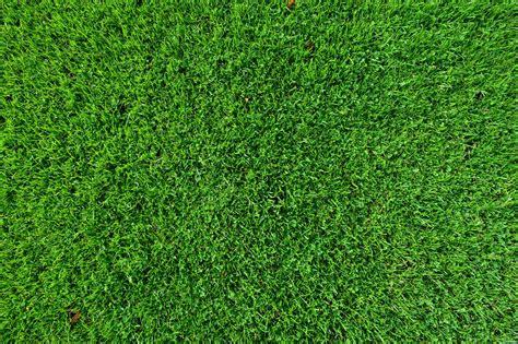 kostenlose bild blatt rasen rasen gruen gruen muster